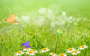 field, Chamomile, grass, Butterflies, Macro