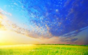 поле, трава, ромашки, цветы, небо