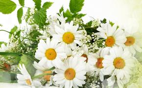 цветы, букет, ромашки