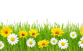 ромашки, трава, макро