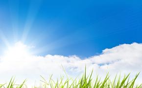 поле, ромашки, трава, макро