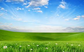 campo, Colline, Camomilla, Fiori, flora, Macro, paesaggio