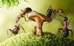 Ants, Insects, Macro, Rendering, fantasy, situation, amusingly
