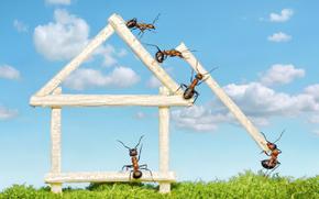 Ants, Insekten, Macro, Rendering, Fantasie, Situation, komisch