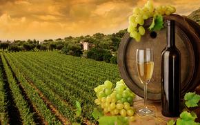 field, wine, Bakal, barrel, grapes