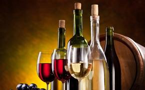 vino, Bakal, uva
