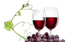 вино, виноград, бакалы