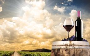 field, barrel, wine, grapes, Bakal