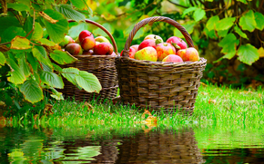 篮, 苹果, 收成