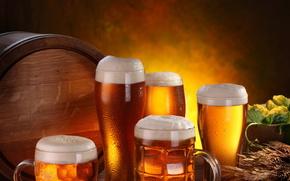 birra, Tazze, spighe di grano, schiuma, bere