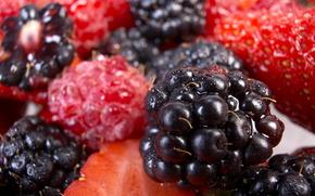 ягоды, ежевика, малина, макро