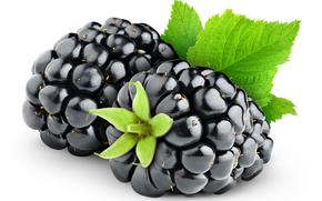 黑莓, 叶子, 浆果