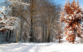 winter, road, forest, trees, landscape