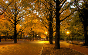 otoño, parque, árboles, carretera, luces, paisaje