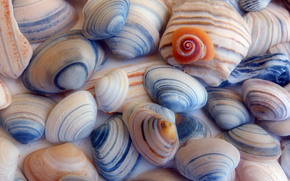 SEASHELLS, seafood, background