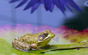 pond, list, frog