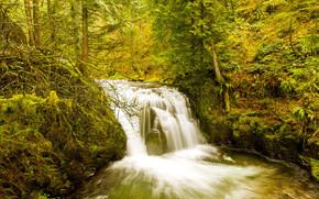 foresta, alberi, cascata, autunno, natura, Multnomah Falls