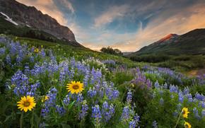 Montagne, Colline, campo, Fiori, paesaggio