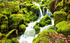 forest, small river, waterfall, moss, stones, nature