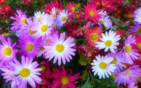 flowerbed, Flowers, flora