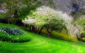 radura, parco, aiuola, PRIMAVERA, albero, fioritura, paesaggio