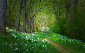 forest, park, footpath, trees, Flowers, landscape