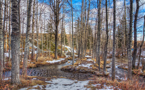 forest, river, trees, snow, nature