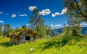 field, cabin, trees, landscape