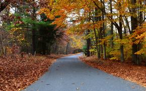 jesień, droga, drzew, krajobraz