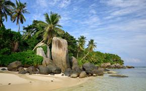 Seychelles, пальмы, море, берег, скалы, камни, пейзаж