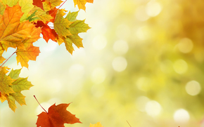 autumn, foliage, nature