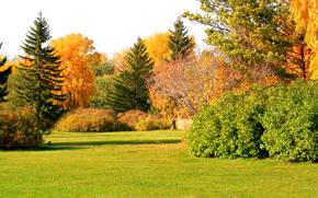 осень, парк, поле, деревья, пейзаж