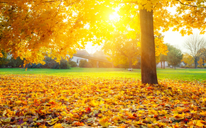 autumn, sun, tree, foliage, nature