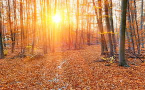 autumn, sun, forest, trees, nature
