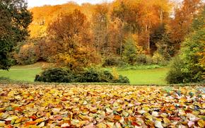 autunno, campo, alberi, fogliame, sentiero, paesaggio