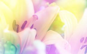цветы, флора, макро