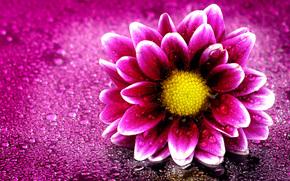 flor, gotas, flora, Macro