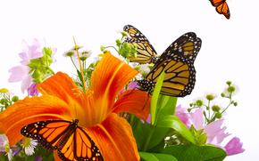 цветы, лилии, бабочки
