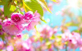 Blumen, Zweig, Macro