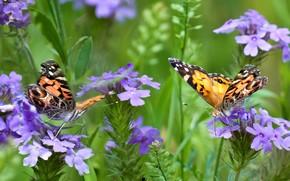 растения, цветы, бабочки, макро