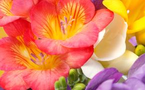 цветы, макр, флора