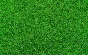 lawn, grass, TEXTURE