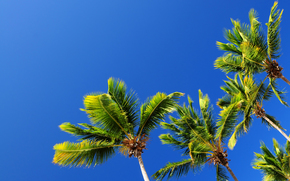 небо, пальмы, природа