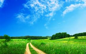 campo, stradale, alberi, paesaggio