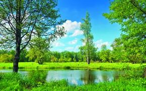 夏天, 湖, 场, 树, 景观