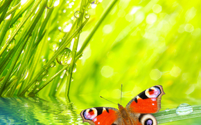 grass, butterfly, dew, Macro