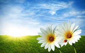field, grass, Flowers, ladybug