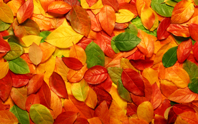осень, листья, природа