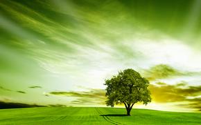 закат, поле, дерево, пейзаж