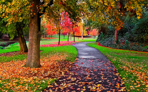 autumn, road, park, trees, landscape